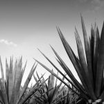 The History of Tequila: All You Need To Know